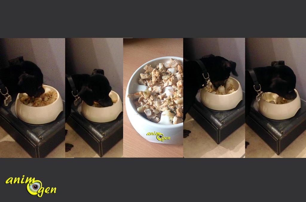 accessoire pour chien gamelle anti touffement go slow dog it animogen. Black Bedroom Furniture Sets. Home Design Ideas