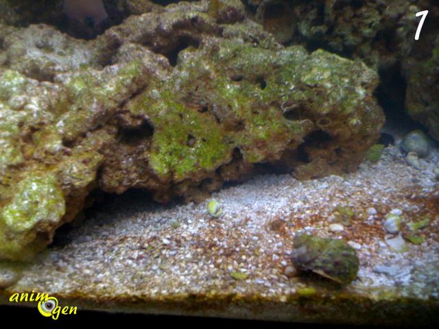les algues dans un aquarium d eau douce type d 233 veloppement 233 limination animogen