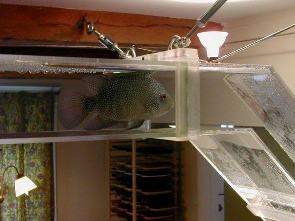 Aquariums en réseau pour nos poissons d'agrément