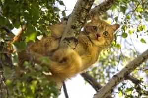 Pourquoi les chats restent-ils coincés dans les arbres et comment les faire descendre ?