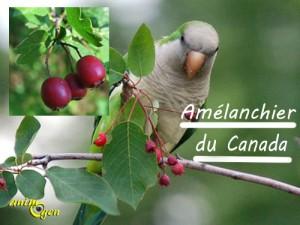 Alimentation : baies d'automne comestibles pour nos perroquets