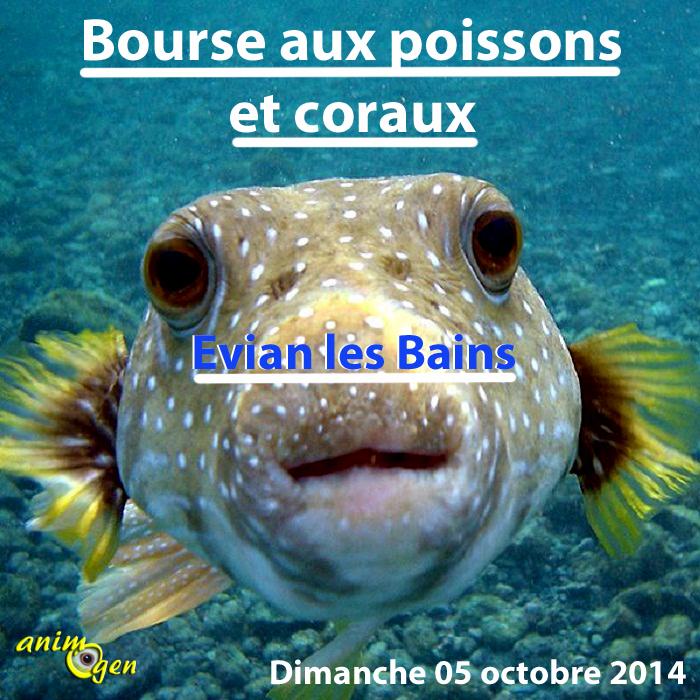 Bourse aux poissons et coraux à Evian les Bains (74), le dimanche 05 octobre 2014