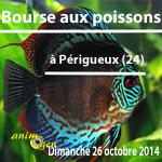 Bourse aux Poissons à Périgueux (24), le dimanche 26 octobre 2014