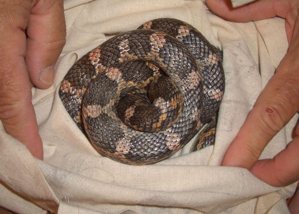 Comment maintenir nos reptiles au chaud en cas de coupure de courant ?