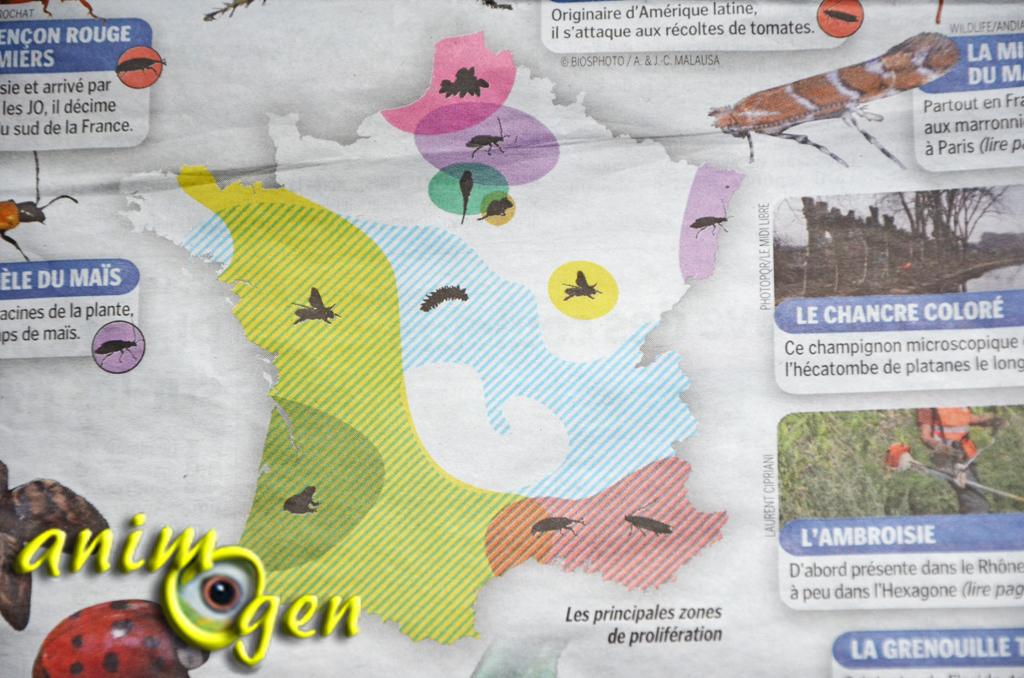 La prolifération d'espèces invasives en Europe, grandeur ou décadence ?