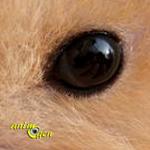 Santé : l'exophtalmie chez le hamster (causes, symptômes, traitement, prévention)