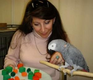 Les perroquets ont-ils vraiment une cervelle d'oiseau ?