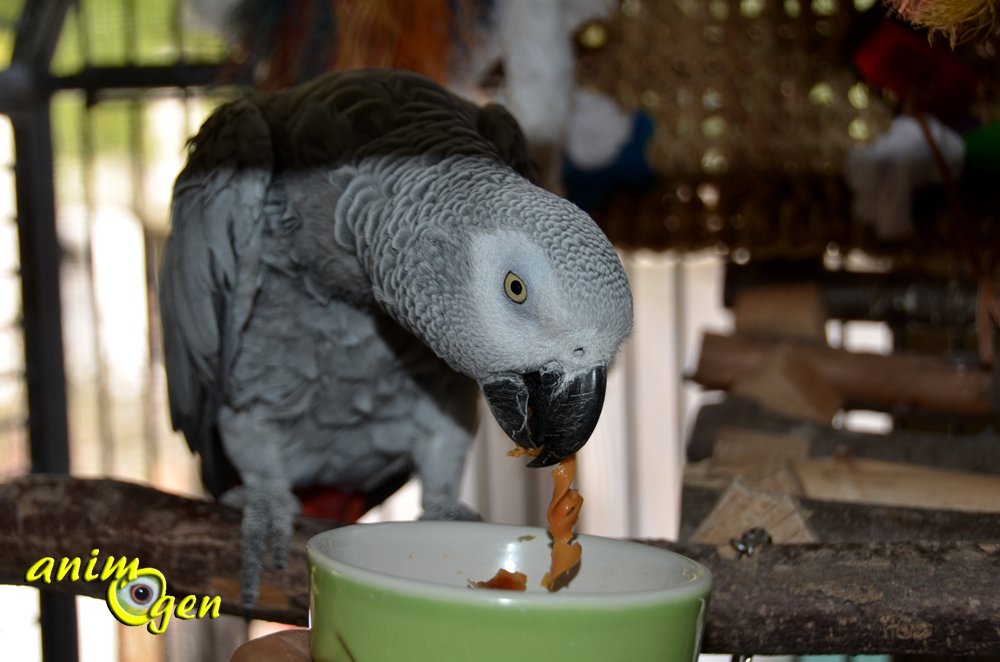 Alimentation pour perroquets : Hawaïan Sweet noodle mix (Versele Laga), test, avis, prix
