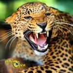 Le jaguar, grand félin des forêts tropicales