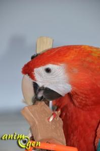 jouets-jeux-argile-perroquets-psittacidés-oiseaux-fabriquer-soi-même-maison-faire-foraging-nac-animal-animaux-compagnie-animogen-21