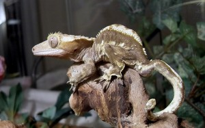 Santé : la maladie métabolique des os chez les reptiles (causes, symptômes, traitement, prévention)