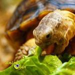 Santé : les effets des oxalates sur les reptiles