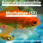 Bourse aux poissons à Morhange (57), le dimanche 19 octobre 2014