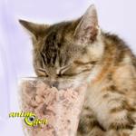 Alimentation : le thon est-il bon pour les chats ?