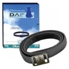 Collier DAP : produit apaisant pour chiens stressés ou arnaque ?