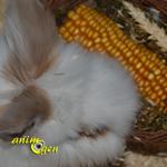 Alimentation pour lapins et rongeurs : petite corbeille pour rongeurs, JR Farm (test, avis, prix)