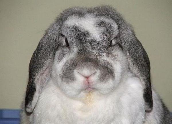 Comportement : les causes d'agressivité chez nos lapins de compagnie (1ère partie)