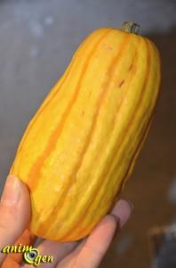 La délicatesse de la courge sweet potatoe, ou Delicata (Cucurbita pepo) pour nos perroquets