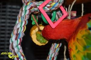 Une bûche de Noël vitaminée pour nos lapins, rongeurs et perroquets