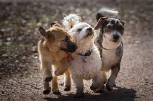 Comment savoir si l'alimentation de nos chiens ne convient pas ?