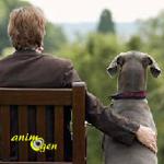 Les chiens peuvent-ils ressentir de l'amour ? La science s'en mêle...