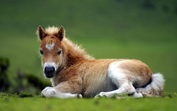 Les effets de la vue de b b s animaux sur notre - Image bebe animaux ...