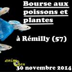 Bourse aux poissons et plantes à Rémilly (57), le dimanche 30 novembre 2014