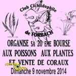 20 ème Bourse aux poissons, plantes et coraux à Forbach (57), le dimanche 09 novembre 2014