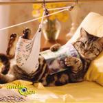 Assurer mon chat : est-ce nécessaire et quelles précautions prendre ? (santé)