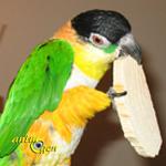 Comportement : comment empêcher nos perroquets de détruire leurs jouets ?