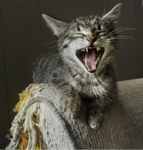 Comment empêcher votre chat d'user ses griffes dans des lieux inappropriés?