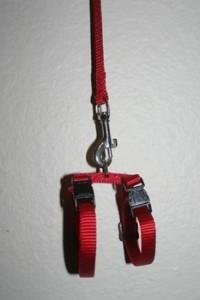 Comment mettre un harnais à un furet et l'ajuster ?