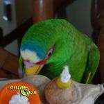 Un hibou chou, boîte à joujoux pour nos perroquets (foraging)