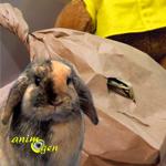 Jouets de foraging à faire soi-même pour lapins, rats, gerbilles, octodons et cochons d'Inde