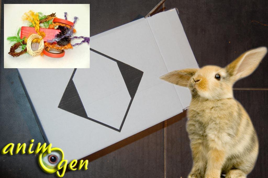 Jouets de foraging faire soi m me pour lapins rats gerbilles octodons et cochons d inde - Jeux pour lapin a fabriquer ...