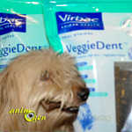 Santé dentaire : lamelles à mâcher pour chien Veggie Dent (Virbac)