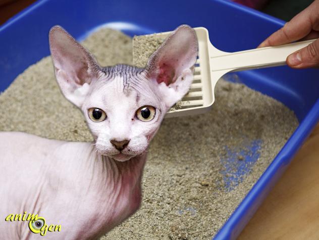 Comment apprendre à un chat à utiliser un bac à litière ?