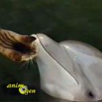 Santé : nos animaux de compagnie transmettent-ils leurs maladies aux espèces marines ?