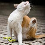 Les parasites externes chez le chat : les moyens de lutte naturels contre les puces