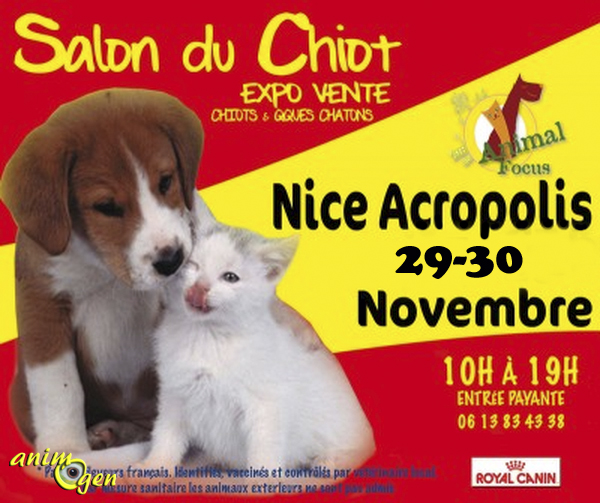Salon du chiot animal focus nice 06 du samedi 29 au for Salon du chien et chat