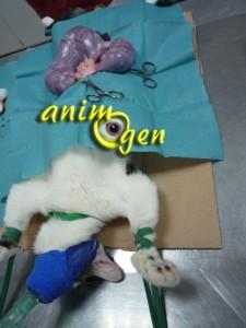 Santé : pourquoi faut-il faire stériliser les chattes ? (attention, photos choquantes)
