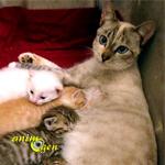 L'importance des phéromones dans l'allaitement des chatons