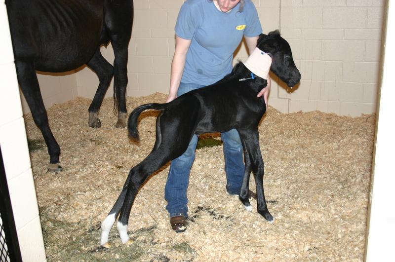 Santé : le tétanos chez le cheval (causes, symptômes, traitement, prévention)