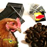 Les aliments à éviter pour les poules