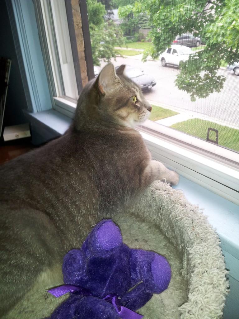 Les troubles du comportement liés à la vie d'un chat ou d'un chaton en milieu clos