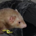 Accessoire : Sac Royal Pet Black XXL pour chat, petit chien et furet (test, avis, prix)