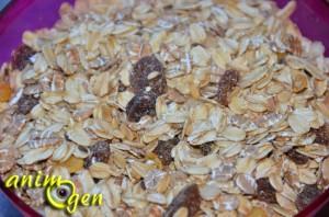Alimentation : un mélange de fruits secs et céréales pour nos rats de compagnie