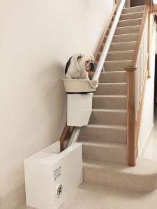 Accessoire : l'ascenseur domestique pour chiens obèses ou âgés