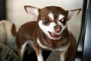 Comportement : le cri d'un nourrisson peut-il rendre un chien agressif ?