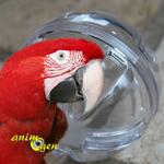 Jeu pour perroquet : la balle buffet (test, avis, prix)